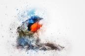 bird-2424074_1920