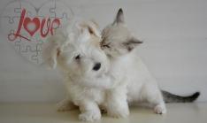 doggy-2763664_1280
